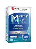 Magné 300 Marin (2 mois) à AUDENGE